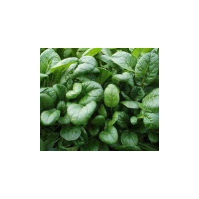 2, 500+ 1/4-oz Savoy TATSOI Heirloom Non-GMO (LMS) Seeds; can Tolerate Hard Frost; 塔菇菜 塌菜 烏塌菜 : Garden & Outdoor
