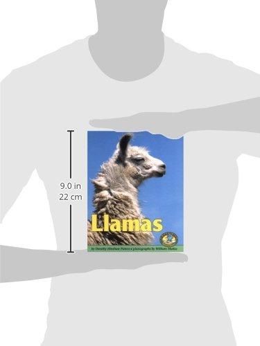 Llamas (Early Bird Nature Books)