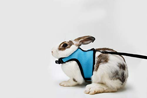Soft Rabbits Harness with Leash-Brand BOBO (Light blue) for sale  Delivered anywhere in USA