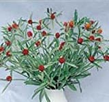 Gomphrena - Strawberry Fields - 100 Seeds