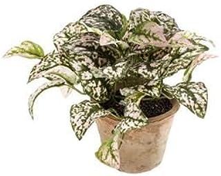artplants–Pianta alle éphélides Artificiale Thessa in Un Vaso in Terracotta, Rose-Vert, 25cm–Pianta Sintetico/Finta Pianta
