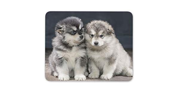 Los cachorros de Alaska Malamute alfombrillas de ratones ...