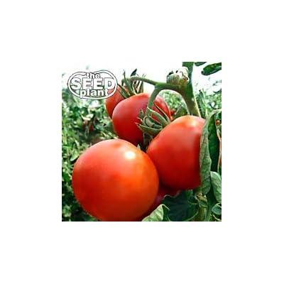 Rutgers Tomato Seeds - 250 Seeds - Non-GMO : Garden & Outdoor