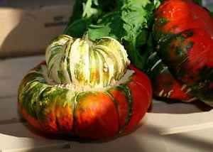 Turk's Turban Winter Squash 10 Seeds Turks Cap Heirloom Ornamental Gourd Edible
