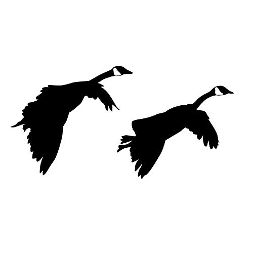 g in Waterfowl Hunting Decal Waterfowl Hunting Geese Gliding Decal 2019 by Waterfowldecals (Medium, Silver Metallic) ()