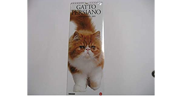 calendario Gato persa 2019 de pared de Vertical f. to 41 x 15 cm: Amazon.es: Oficina y papelería