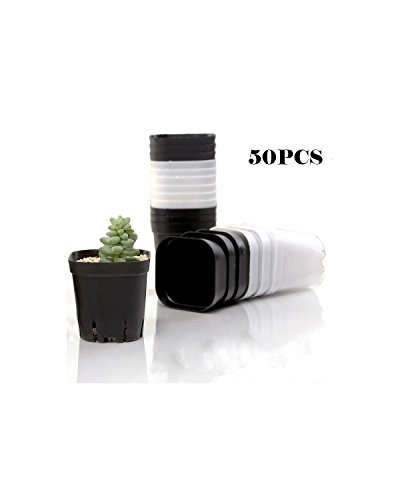 Finico 50pcs Square Nursery Pot /2.75'' Square for Seed Germination, Soil & Hydroponics, Planting Starter Plugs by Finico