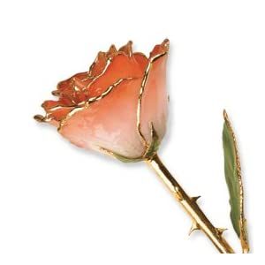 Allmygold Jewelers Long Stem Dipped 24K Gold Trim White & Orange Lacquered Genuine Rose In Gift Box
