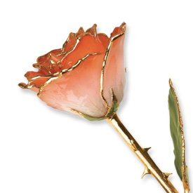 Allmygold Jewelers Long Stem Dipped 24K Gold Trim White & Orange Lacquered Genuine Rose In Gift ()