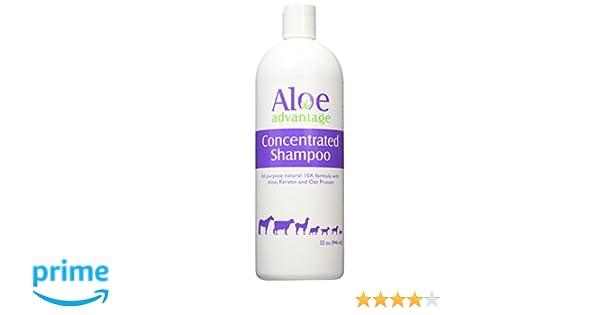 : Amazon.com: Aloe Advantage Aloe Concentrated Shampoo, 32-Ounce