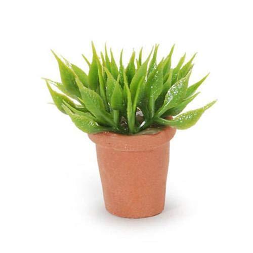 Darice House Plant