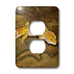 3d Rose 3dRose Lsp_73100_6 Leopard Gecko Morph, Lizard, P...