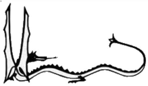 Smaug LOTR Black Decal Vinyl Sticker|Cars Trucks Vans Walls Laptop| Black |5.5 x 3.5 in|LLI522 (Smaug Tattoo)