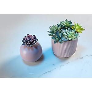 Convenient Creations Artificial Succulent Plants 14 pcs Faux Succulents, Fake Plants for Decoration, Shelf Decor, Wreath or Terrarium - Realistic Fake Succulents, Mini Air and Aloe Plant and More 4
