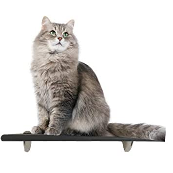 Modern Handcrafted Solid Hardwood Space Saving Wall-Mounted Climb Scratch Activity Tree Shelves 1 Post Contempo Floating Cat Post Step Shelf Choose Shape /& Wood Finish by Purrfectly Catastic