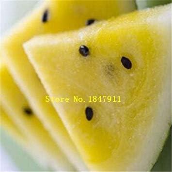 ASTONISH SEEDS: Verde: gran venta original pack 30 semillas / pack ...