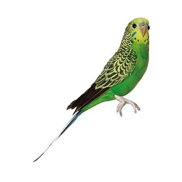 amazon バード セキセイインコ グリーン birds budgie green puebco