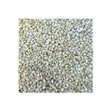 Bulk Seeds, 100% Organic White Hulled Sesame Seeds, 25 Lbs