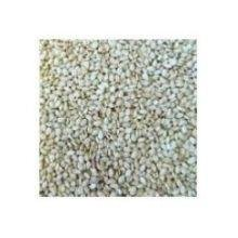 Bulk Seeds, 100% Organic White Hulled Sesame Seeds, 25 Lbs by UNFI