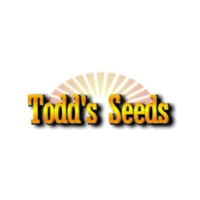 Todd's Seeds - Hard Red Wheatgrass - 5 Lb's - Sprouting Wheat Grass Seeds for Sale - Plant & Grow Wheatgrass, Flour, Grain & Bread - Wheatgrass Juice - Excellent Germination - Sprouting Seeds - Sprouted Wheat: Grocery & Gourm
