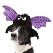 [Bat Wings Pet Hat Small] (Bat Wings Dog Costume)