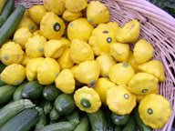 10 GOLDEN YELLOW BUSH SCALLOP SQUASH (Patty Pan / Paty Pan / Squanter Squash) Summer Cucurbita Pepo Vegetable Seeds