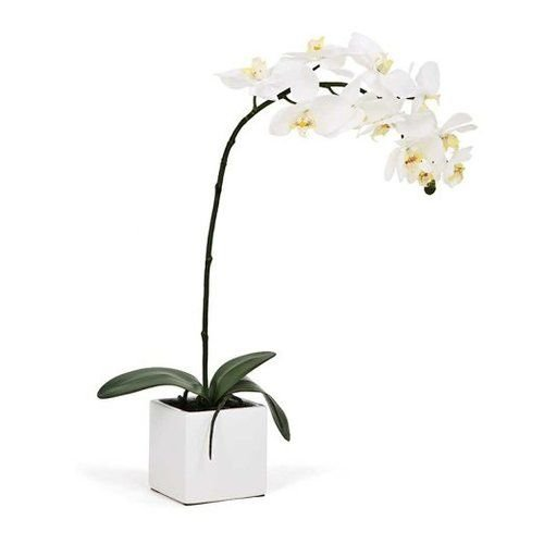 - Torre & Tagus 1684-100010 Orchid Potted Single Stem 28-Inch, White