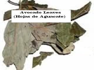 Avocado Leaves, Dried (Hojas de Aguacate), 2oz