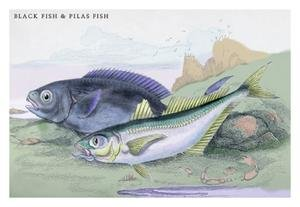 (Blackfish and Pilas Fish Paper poster printed on 20 x 30 semi-gloss paper.)