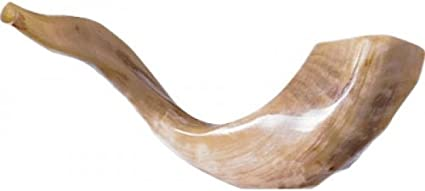 amazon com shofar kosher rams horn polished natural chofar showfar jewish blow trumpet gift elul instrument musical instruments shofar kosher rams horn polished natural chofar showfar jewish blow trumpet gift elul instrument