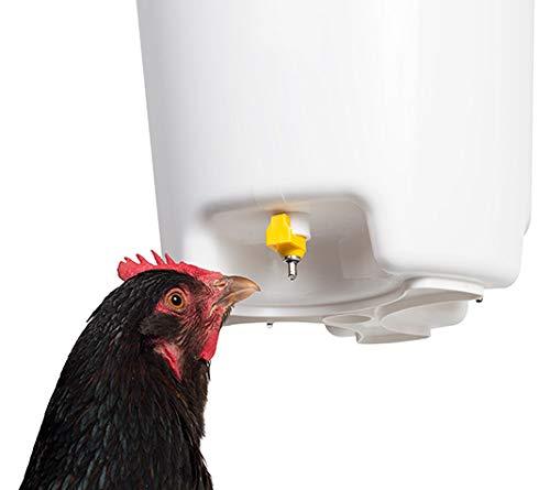 FINCA CASAREJO Bebedero para gallinas con chupetes de 12 litros. Bebedero con 3 tetillas.