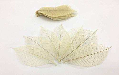 (Emivery 100 Skeleton Leaves, Rubber Tree, Natural Color,No Paint Scrapbooking Craft DIY Card Wedding)