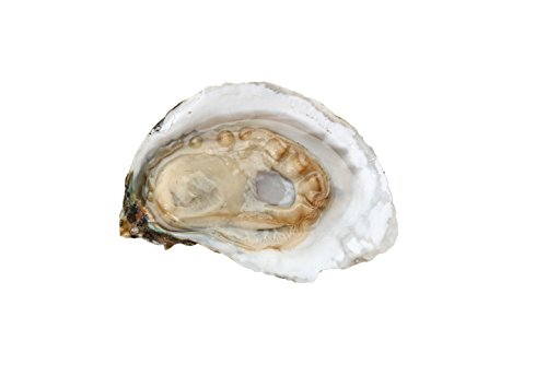 Fresh Chesapeake Bay Oysters (50 Eagle - Oysters Live