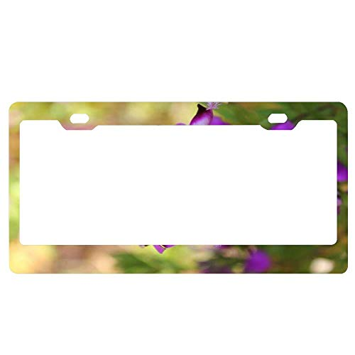 huizehonghong License Plate Frame,Aluminum Metal Car Tag Frame,Auto Car Truck Tag Holder for US Standard,2 Holes and Screws - Purple Passion~