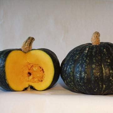 Amazon Com Heirloomsupplysuccess 15 Heirloom Buttercup Winter Squash Pumpkin Seeds Garden Outdoor