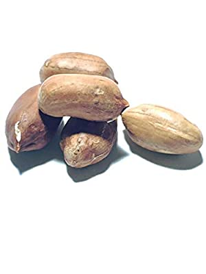 World's Largest Peanut (Arachis hypogaea) Seeds by Robsrareandgiantseeds UPC0764425789383 Non-GMO,Organic,USA Grower,Farm,Showy,Recipe,Huge Yields,Dishes,Sacred,1264 Package of 5 Seeds
