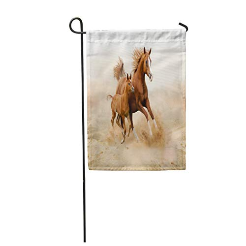 (Semtomn Garden Flag Brown Animal Purebred White Horse in Desert Foal 28