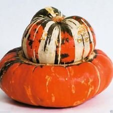 (Turk's Turban Gourd Seed,Colorful, buttercup-shaped, fall display addition.. (10 Seeds) )