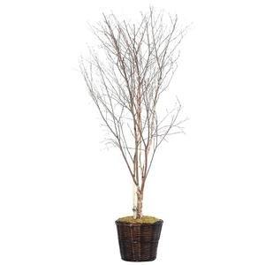 Vickerman 6-Feet Artificial Winter Birch Tree in Decorative Container