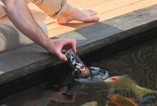 Pond Fish Feeding Bottle by Veld