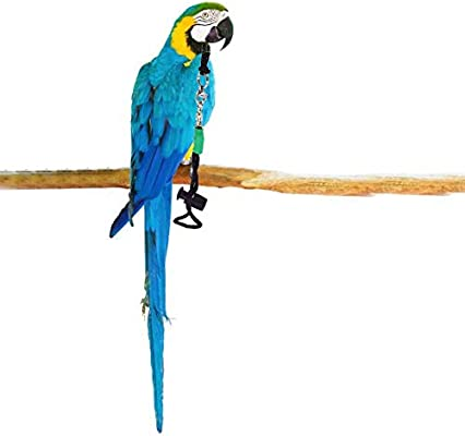thorityau Arnés y Correa para pájaros, arnés para pájaros de Loro ...