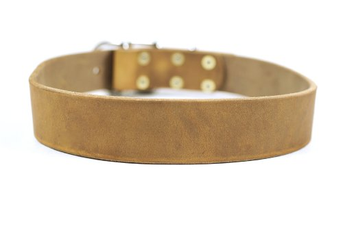 """Dean and Tyler """"B and B"""", Basic Leather Dog Collar with Strong Nickel Hardware – Tan – Size 40-Inch by 1-1/2-Inch – Fits Neck 38-Inch to 42-Inch"""