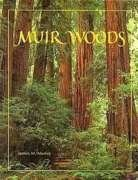 muir woods national monument - 4