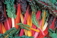 Bright Lights Swiss Chard 200 Seed