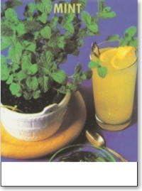 スペアミントの栽培セット/豊作セット(液体肥料付き)プランターホワイト仕様