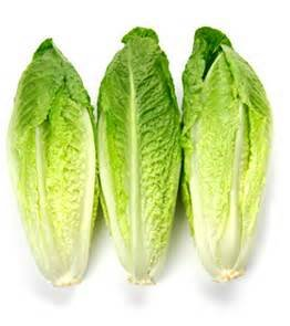 Romaine Hearts (ROMAINE HEARTS TENDER GREEN LEAF FRESH PRODUCE FRUIT VEGETABLES 3)