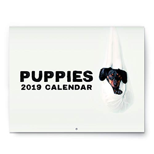 Puppies - Official 2019 Large Wall Calendar - 11