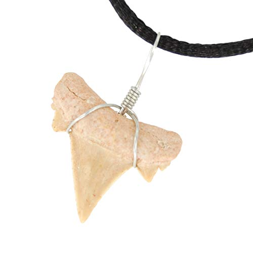 Steampunkers USA Power Pack Series - 20mm Fossil Sand Tiger Shark Tooth - Natural Gemstone Tribal Ethnic Carved - Stainless Steel Bail