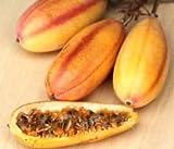 Banana passionfruit, Passiflora MOLLISSIMA Passion Fruit Flower Seed 100 Seeds