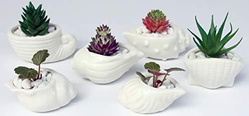 6 PCS Set 2.9-3.9 inch Ocean Seashell Shaped Ceramic Pot Succulent Planter/Succulent Cactus/Plant Pot/Flower Pots/Planter/Container/Succulent Pot/with A Hole for Home Garden Office Desktop Decoration ()